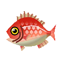 red snapper fish, which you can catch in game